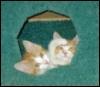 bearfairie: (Baby Kittehs!)