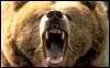 bearfairie: (Angry bear)