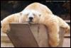 bearfairie: (Tired Bear)