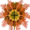 cinnamon_anemone: (Default)