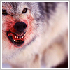 mortalcity: A snarling wolf with blood on its face. (wolves | blood burns like fire)