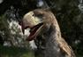 chalicother: Llallawavis scagliai (Terror Bird)