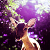 ext_438634: purple photo of a doe, in the woods (Default)
