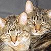 heresluck: (cats: t+t)