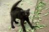 sofia_falk: (чёрный кот)