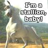coraa: (stallion baby!)