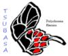 shiori_makiba: name and butterfly (inoue tsubasa)
