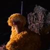neverlosemydreams: (Bird Noises)