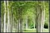rhiannons_gypsies: Pretty portal woods! (Default)