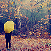 lizcommotion: Someone with an umbrella standing in a forest of fall trees (rain)