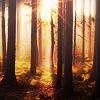 withoutnightnostars: (forks forest)