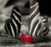 luminare91: (butterflies)