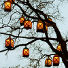 calcatrixcrownd: spooky tree lamps (lamps)