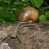 marashar: (Snail)