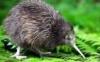 poshmerchant: (kiwi)