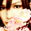 attie: Piko peeking out from behind a cherry flower branch. (utaite - piko hiding behind flowers)