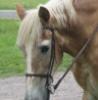unicornduke: (duke)
