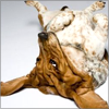 delight: basset hound on back (basic doggerel)