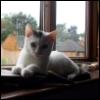 wezwaij: (kitten loki)