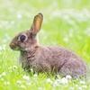 gaivekitty: (bunny)