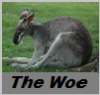 "seryn: downcast kangaroo with caption ""the woe"" (roo)"