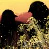 windsnocturne: (Nageki/Hitori)