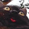 peachpai: (cats)