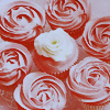 deumion: seven cupcakes iced to look like pink roses. (romance~)