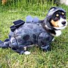 littlemousling: Dog in a dinosaur costume (dinosaur dog)
