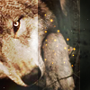 tala_wolf: (Sparkly wolf)