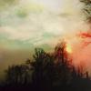 mischiefnight: (a darkling wood)