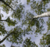 halifaxearthtech: (Tree Canopy)