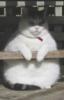 mother_bones: (fat kat)
