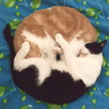 lauredhel: two cats sleeping nose to tail, making a perfect circle. (labrador)