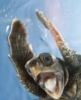 mdlbear: (happy-turtle)