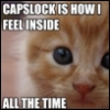 "xtina: A wistful kitten: ""CAPSLOCK IS HOW I FEEL INSIDE -- ALL THE TIME"" (capslock, feelings)"