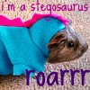 littlemousling: A guinea pig in a stegosaurus costume, being awesome (stegosaurus)