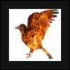 ernads: A bird drown in fire (Fire Bird)
