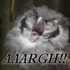 filialucis: (Owl Aaargh)