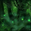 beasts_of_homeworld: Deep in an ancient forest where green moss covers all, little glowing balls of coloured light float about in the mist. (Any - Forest)