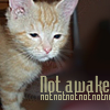 "apollymi: Sleepy orange kitten, text reads ""Not awake not not not not not"" (Kitten: Not awake)"