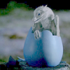 cat_77: baby dragon! (Aithusa)