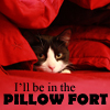 pepper: My cat in a pillow fort (Kat pillow fort)