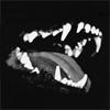 onikins: (Jaws)