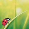 ariestess: (ladybug -- from freetimer_icons)