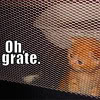 asfreeasleaves: A kitten peering out through a grate, as if he is behind bars. (Felon feline)