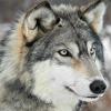 farworldwolf: (moondefur)