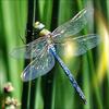 akaibara: (dragonfly) (Default)