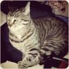 themusecalliope: Stripey Sam Kitty (Kitty)