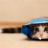 benedict: (cat hiding)